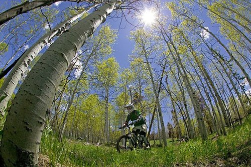 A beautiful sunny day with white Aspen groves to cruise through.