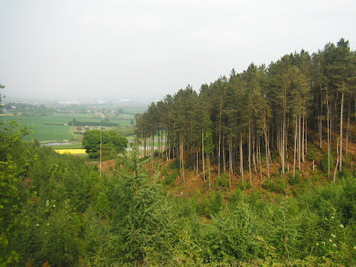 hanchurch woods