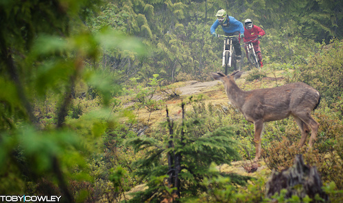A cheeky deer in the bike park.