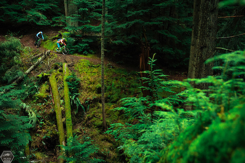 Deep in the moss in Orcas, Island.