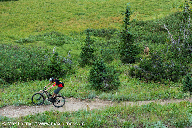 go-ride.com's pro rider Parker DeGray being watched by nature as he styles down one of Wasatch's most beautiful trails.