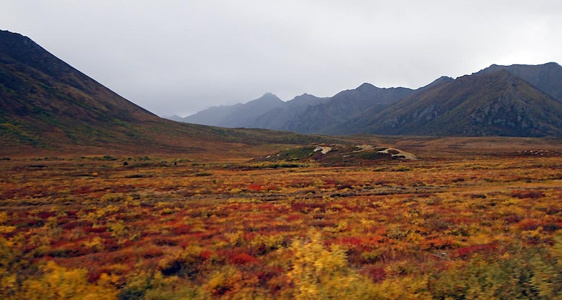 Typical Dempster Northern Yukon fall colours. The fall reds oranges yellows went from faint to startling in the week we spent on the Dempster Highway. This was taken on our way back heading south from the Artic Circle to Dawson City.