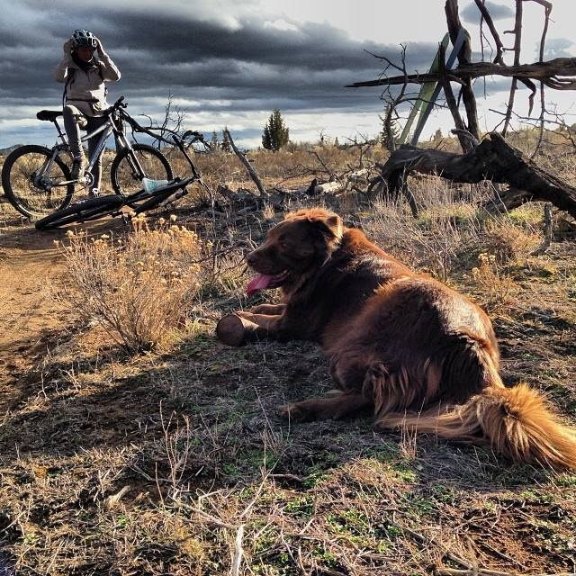 The greatest trail dog taking a rest.