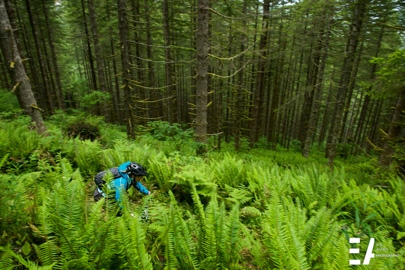 Michelle Brittnacher Amateur speeds through a sea of ferns on Stage One.