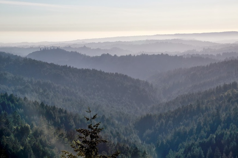 The magical Soquel Demonstration Forest and beyond... Photo by Bruce Dorman