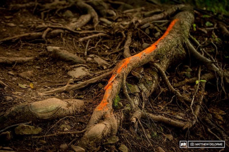 An orange root here...
