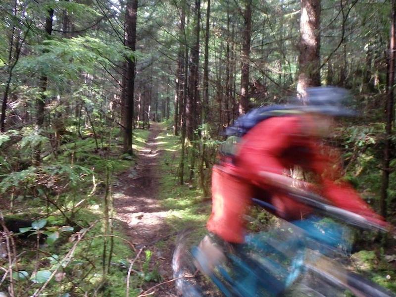 Pic 15 - Merv s enchanted singletrack on Bear Mountain