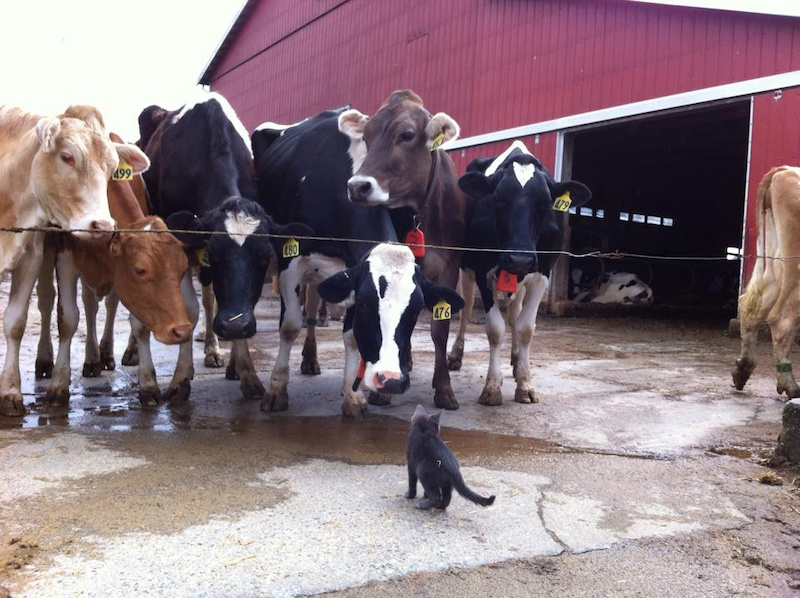 Pic 20 Meeting some new friends on the Agassiz farm tour