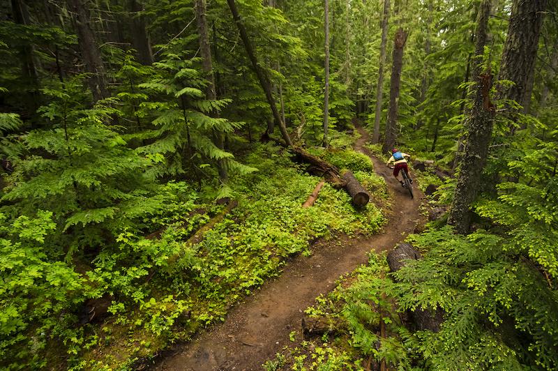 Stu Dickson flows through Mt. MacPherson s lush green forest. Bruno Long Photo.