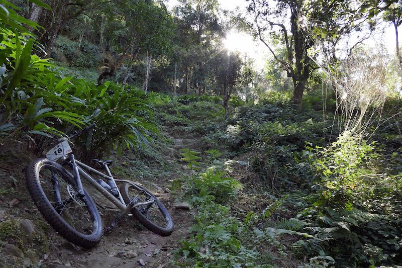 Bike in Jungle