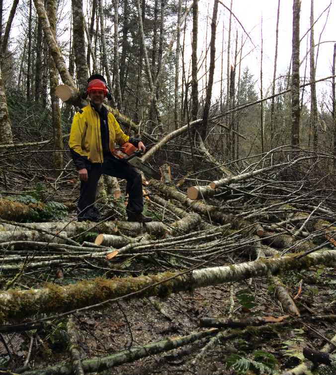 NWTA Board Member Tedd Dodd doing saw work to untangle 2 miles of trail today.