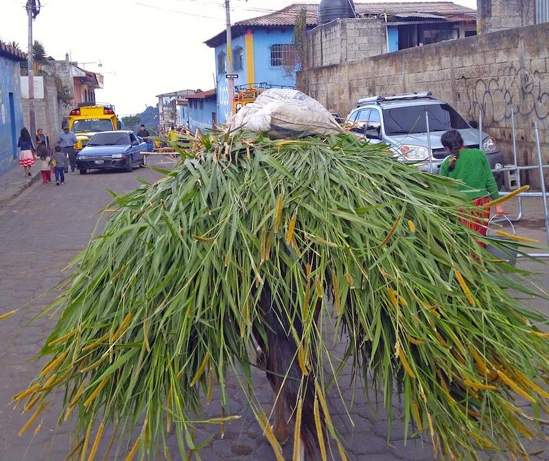 Burros are often used to transport stuff Santa Maria de Jesus