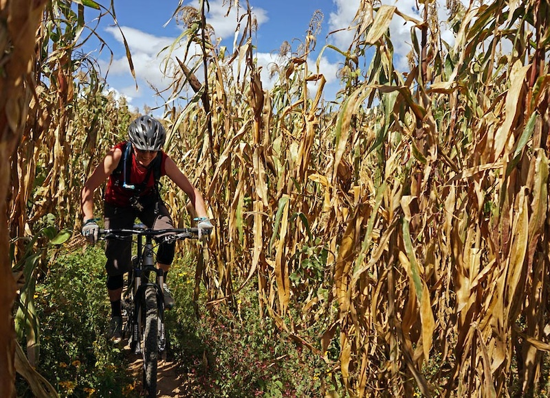 This section was super narrow singletrack where you had watch your bars through corn fields