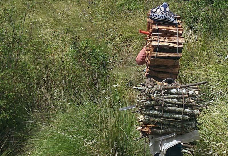 Human transportation for cut firewood Atitlan
