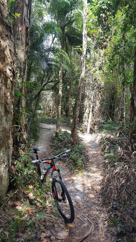 Pinehurst Mtb Trail Mountain Bike Trail West Palm Beach