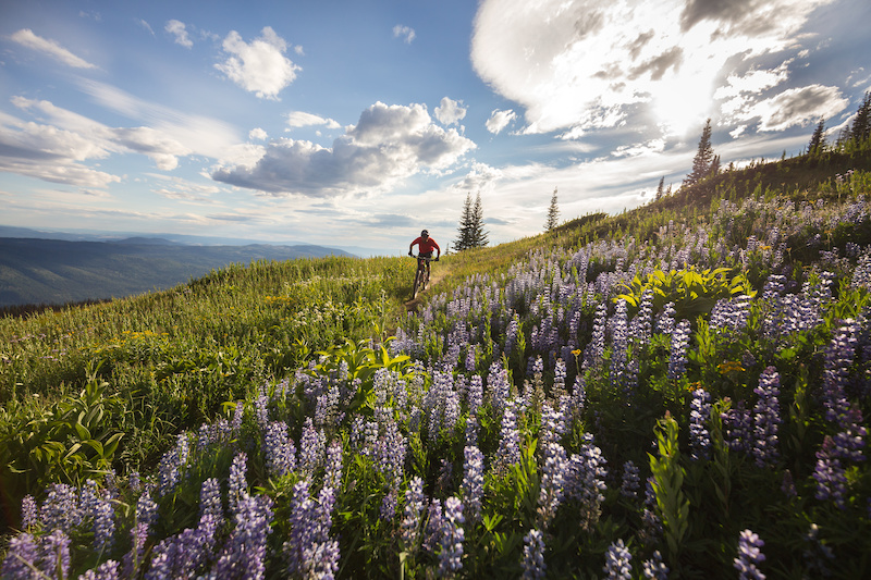 Dylan Sherrard enjoying a summer evening among the lupins on Altitude. Photo by Riff Stills.