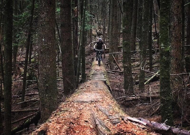 Murder forest