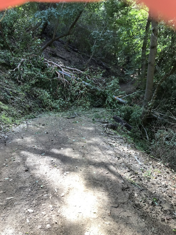 Literally 3 different trees fell in the same spot on Sulfur springs climb. Not easy to climb under or over.