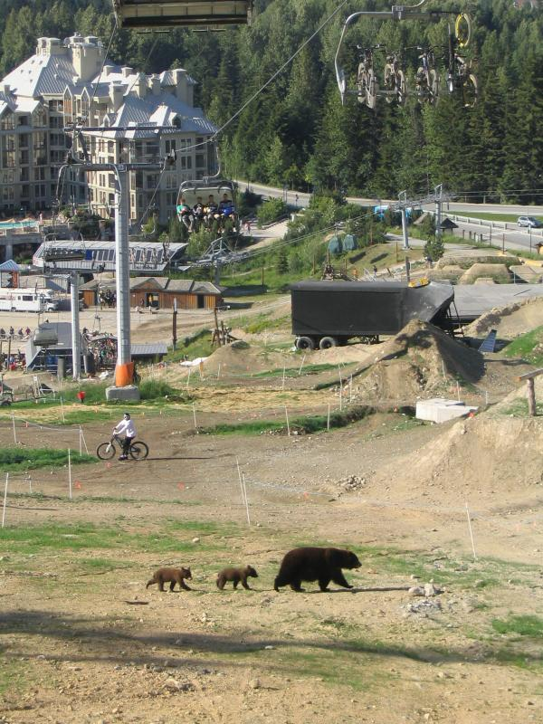 bears in whistler bike park