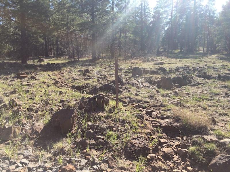 Mogollon Rim Mountain Biking Trails | Trailforks