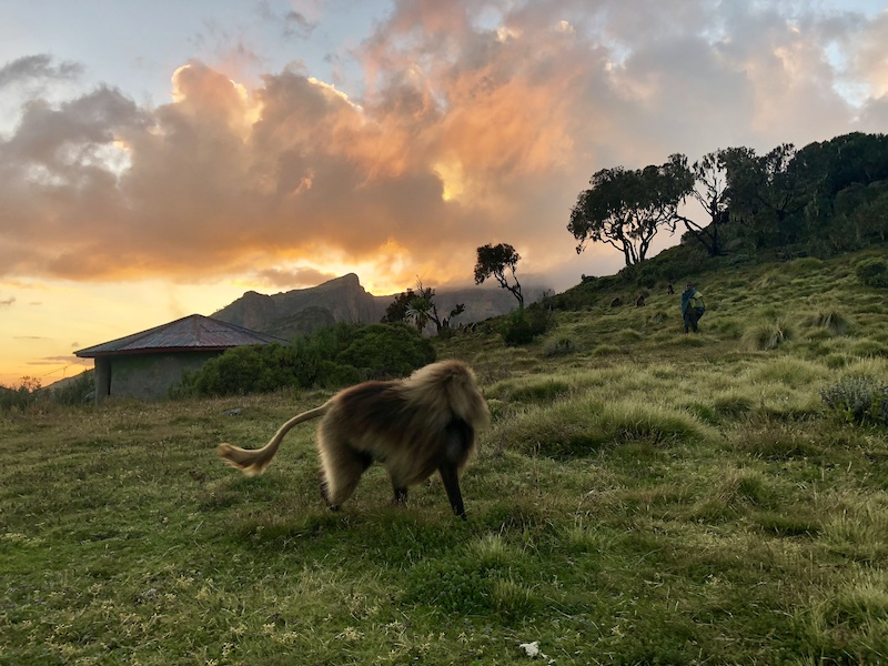 Enjoying the evening at Chennek basecamp 3600 m with baboons