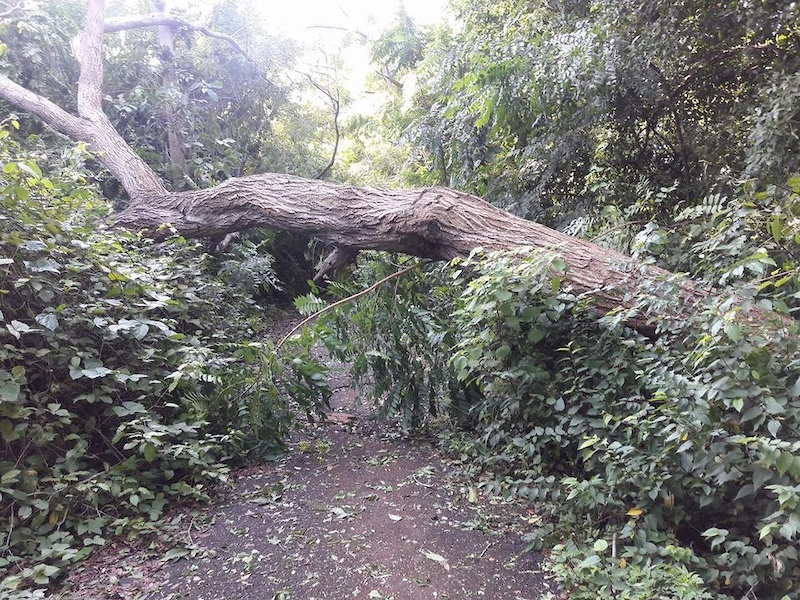 Examples of widespread trail destruction caused by hurricane Mar a.