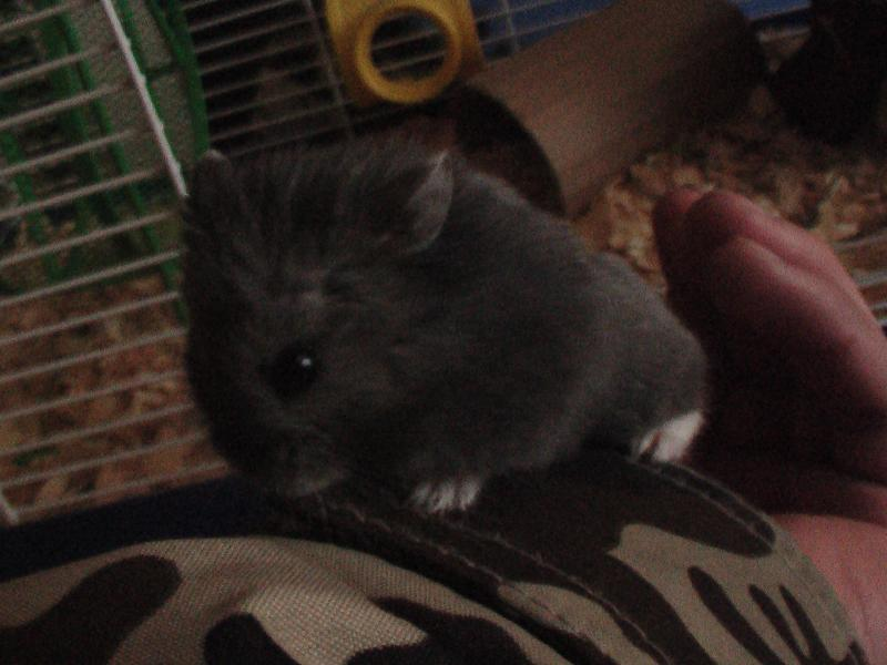 johnny my hamster