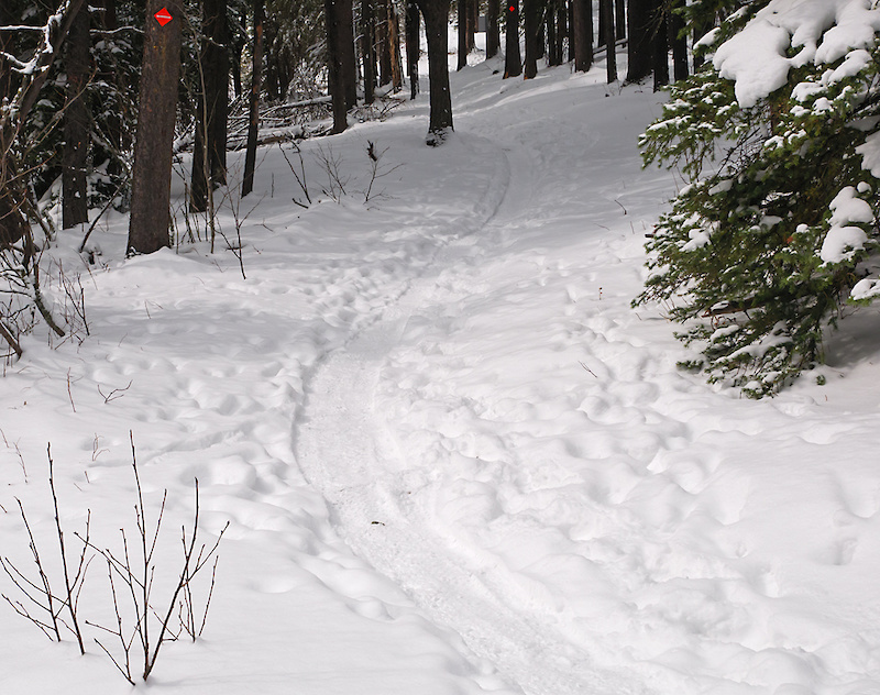 Ranger Summit at intersection with Loggers xc ski trail May 1.