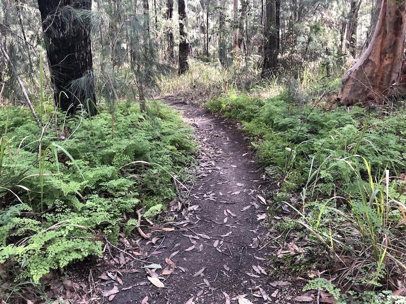 Medowie, Medowie Mountain Biking Trails   Trailforks