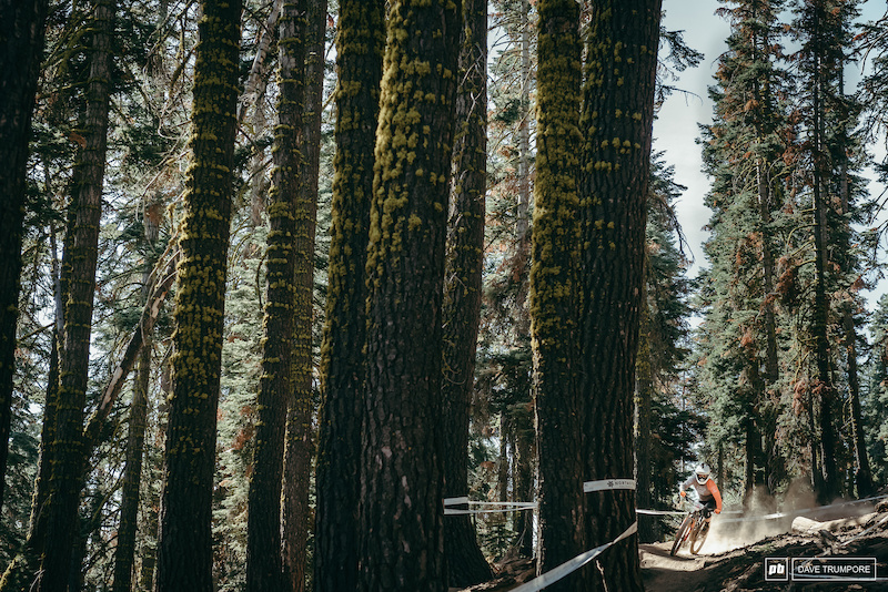 Bex Baraona and some big trees on Stage 2