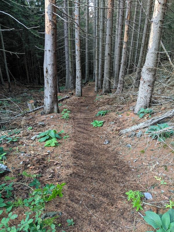 Harz singletrack