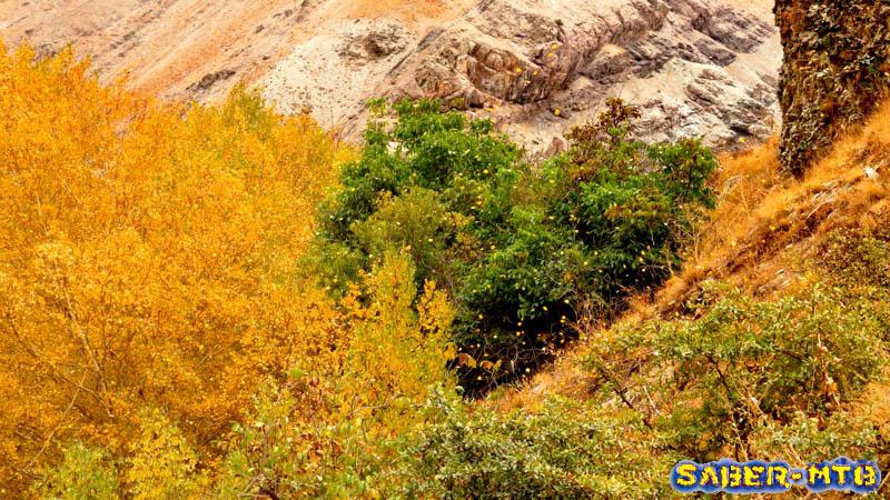 Ahar Autumn