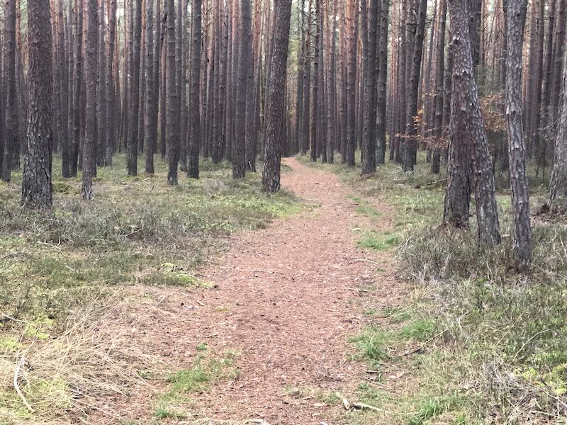 single trails erlangen