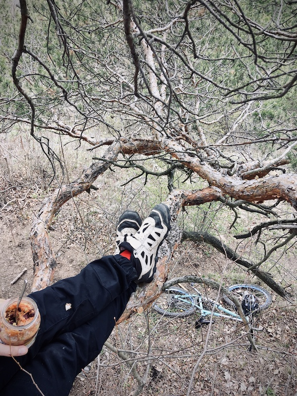 lunch up in a tree