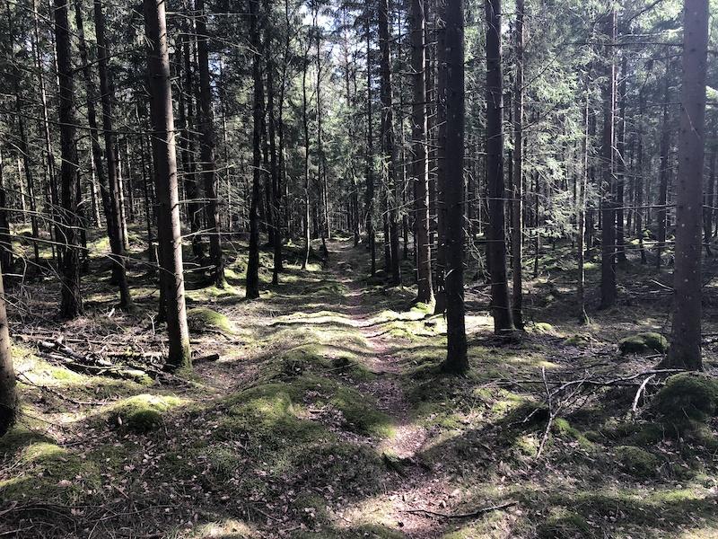 single i rävlanda)