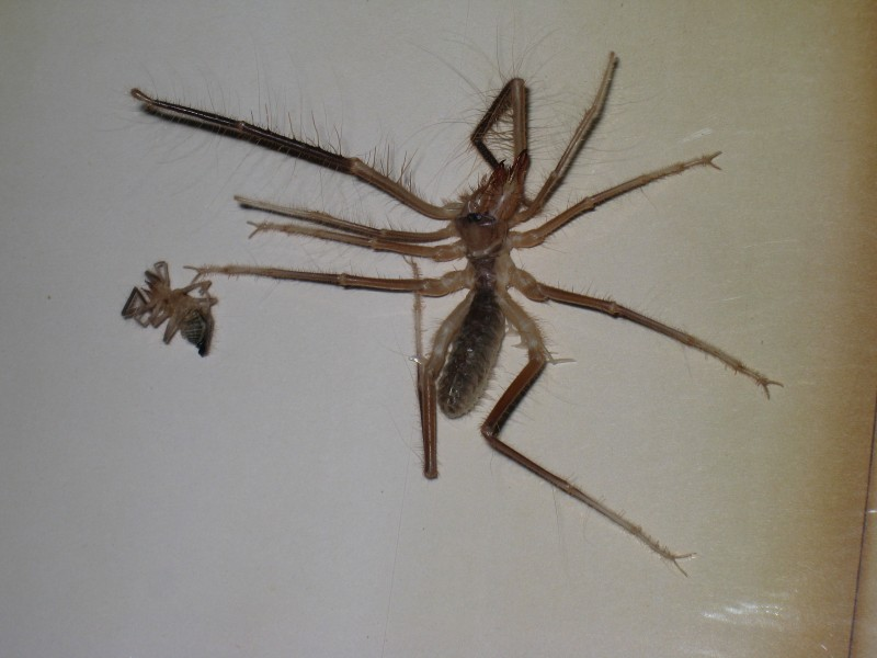 These ten legged freaks are grosser when they're alive