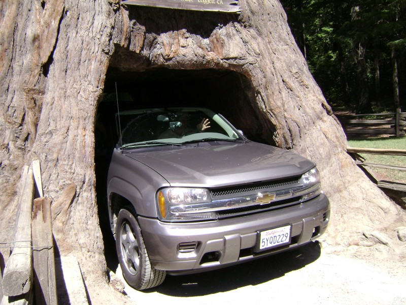 my dad driving our rental throgh a tree!!!!!!