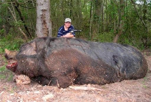1000+ lb hog