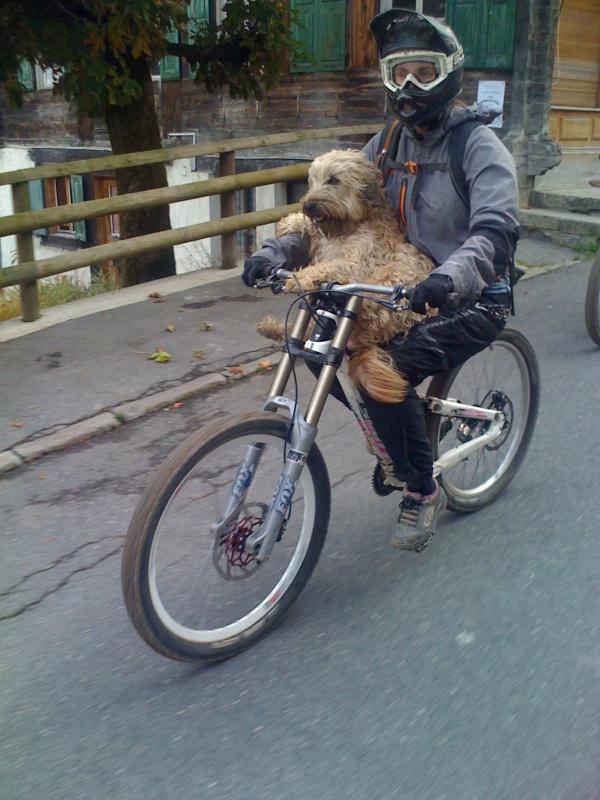 coolest dog ever