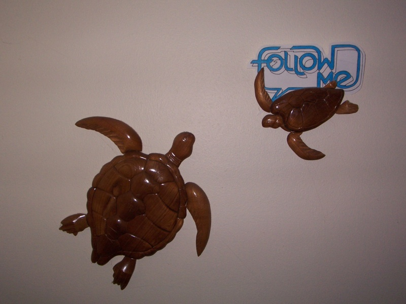 Follow Me turtle