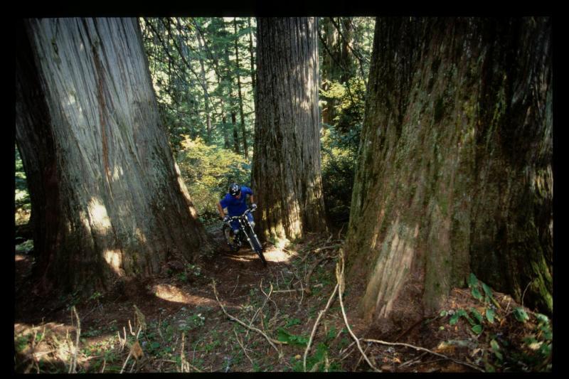 Derek playin it the trees.