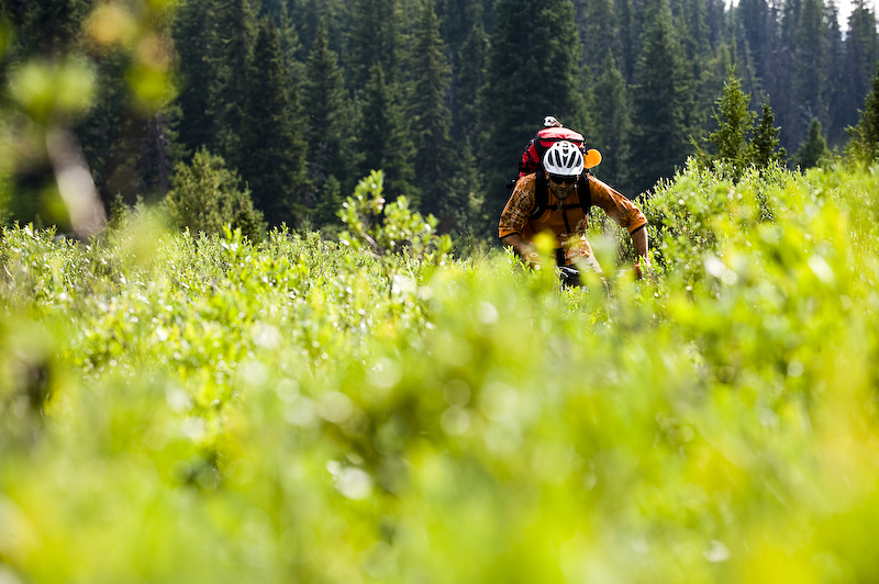 The problem with backcountry trails that rarely get ridden, is that if no one takes care of them, the plants will. Back to battling the bushes...