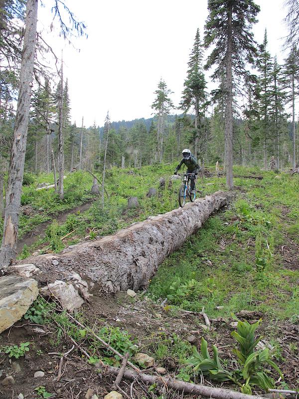 Log ride on Sugar.
