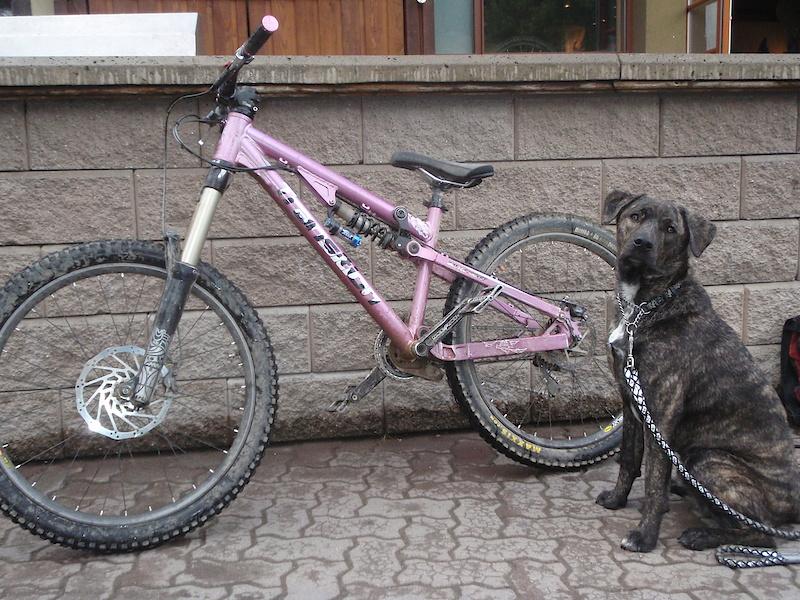 Bike and dog ant GBB
