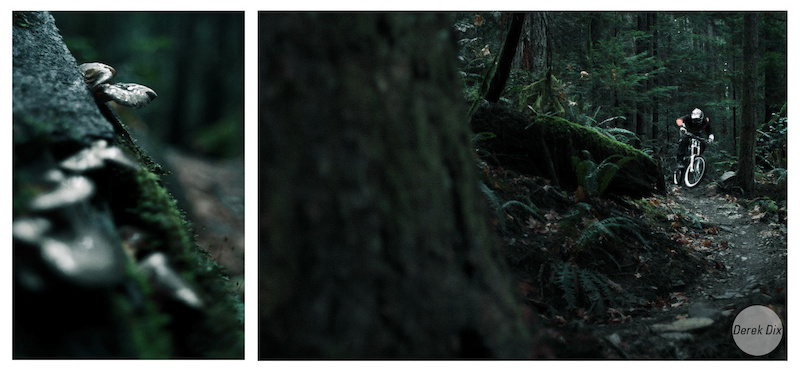 Fast corner next to a nurse log playing host to some oyster mushrooms.