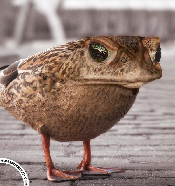 Frog bird