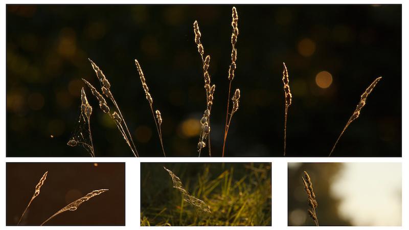 pics from Season s Flow http www.facebook.com jordanolthuismtbvideo http www.pinkbike.com video 262455