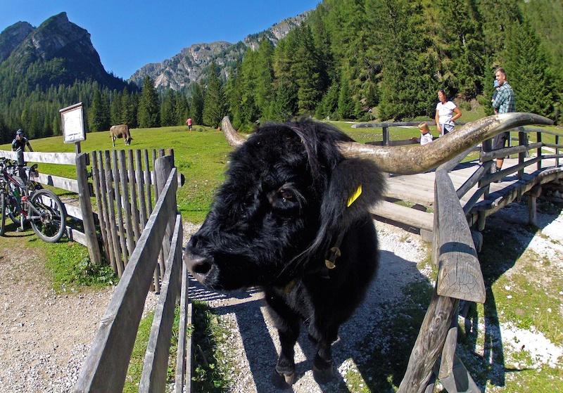 Dolomites chue