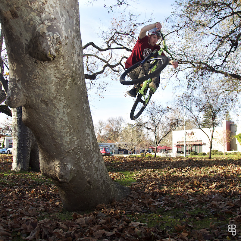 tree steeze