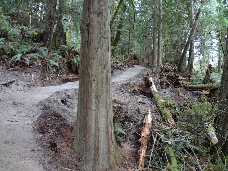 Part of the Suncoaster Trail sweet singletrack